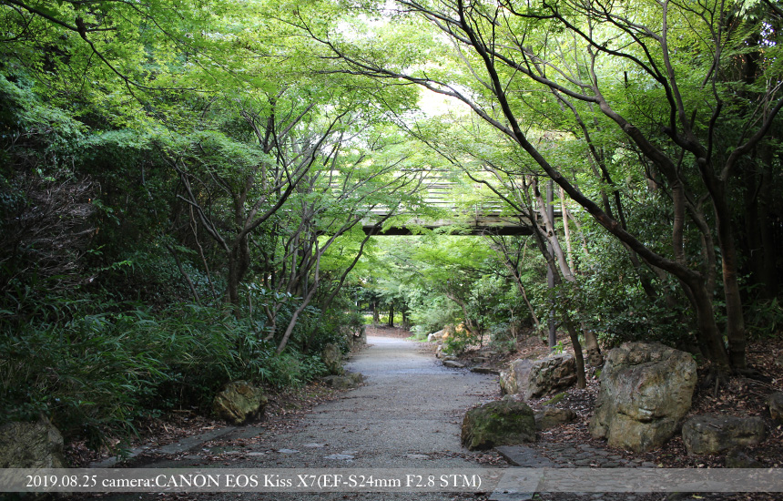 梅小路、森の中の小道