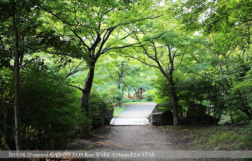 梅小路公園、中央広場から森へ