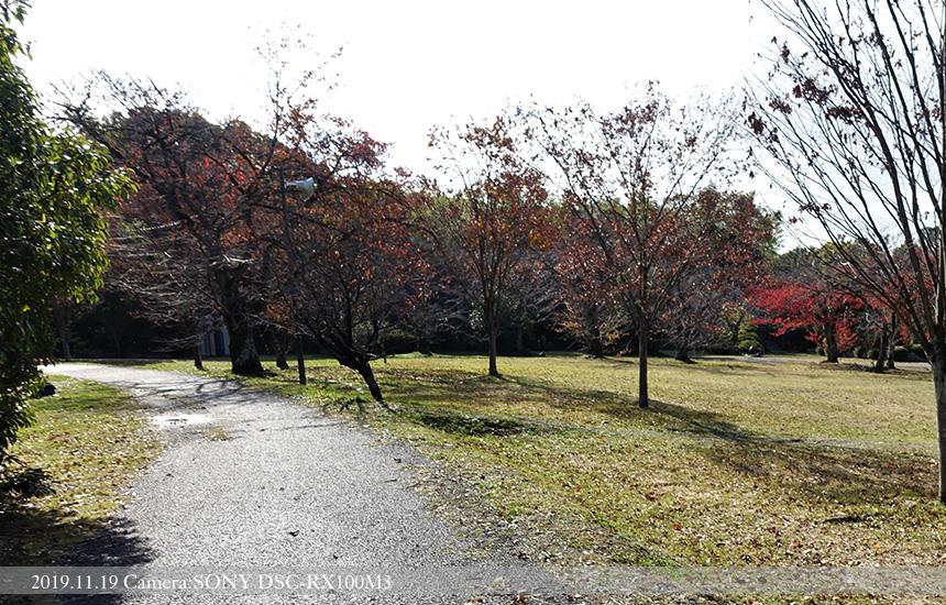 伏見桃山運動公園内(2)