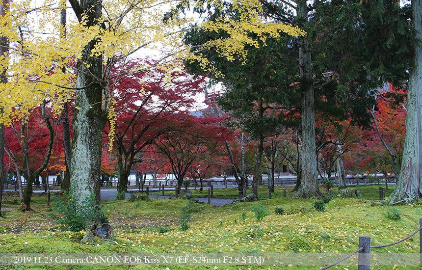 南禅寺境内庭の落葉(2019.11.23 撮影)