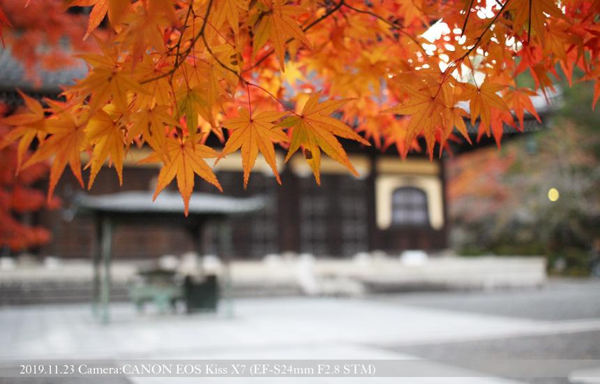 南禅寺 法堂(2019.11.23 撮影)