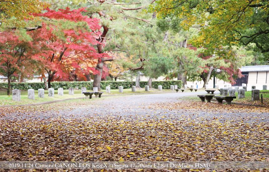 秋の御所(2019.11.24撮影)